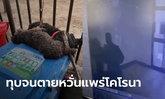 อาสาหมู่บ้านจีน คว้าเหล็บทุบหมาพุดเดิ้ล แดดิ้นต่อหน้าเจ้าของ หวั่นแพร่โคโรนา